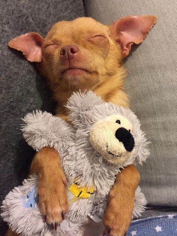 Kostenlose Hunde Bilder Für Facebook - Kostenlose Hunde Bilder Für Facebook