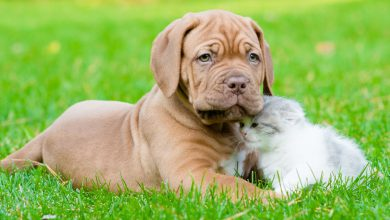 Kostenlose Hunde Bilder Kostenlos 390x220 - Kostenlose Hunde Bilder Kostenlos