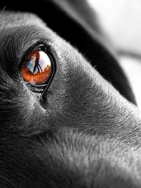 Kostenlose Hunde Bilder - Kostenlose Hunde Bilder