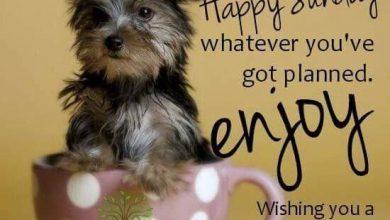 Kostenlose Hundebilder Für Facebook 390x220 - Kostenlose Hundebilder Für Facebook