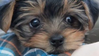 Kostenlose Hundebilder Kostenlos 390x220 - Kostenlose Hundebilder Kostenlos