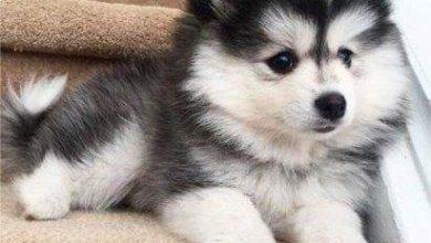 Kostenlose Hundebilder Kostenlos Herunterladen 390x220 - Kostenlose Hundebilder Kostenlos Herunterladen