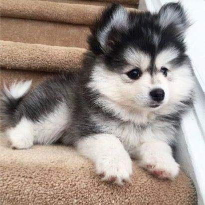 Kostenlose Hundebilder Kostenlos Herunterladen Bilder Und Spruche Fur Whatsapp Und Facebook Kostenlos