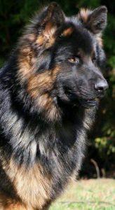 Kurzhaarrassen Hund 164x300 - Kurzhaarrassen Hund