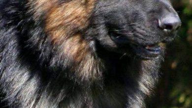 Kurzhaarrassen Hund 390x220 - Kurzhaarrassen Hund