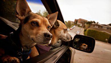 Langhaar Hunde 390x220 - Langhaar Hunde