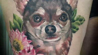Langhaar Terrier Rassen 390x220 - Langhaar Terrier Rassen