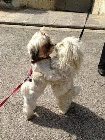Laufhund Repräsentative Arten - Laufhund Repräsentative Arten