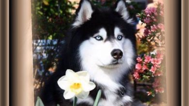 Liste Aller Hunderassen 390x220 - Liste Aller Hunderassen