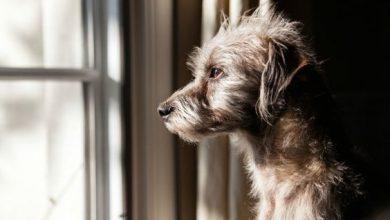 Liste Hunderassen Mit Bild 390x220 - Liste Hunderassen Mit Bild
