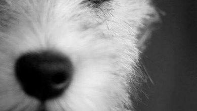Lockige Hunderassen 390x220 - Lockige Hunderassen