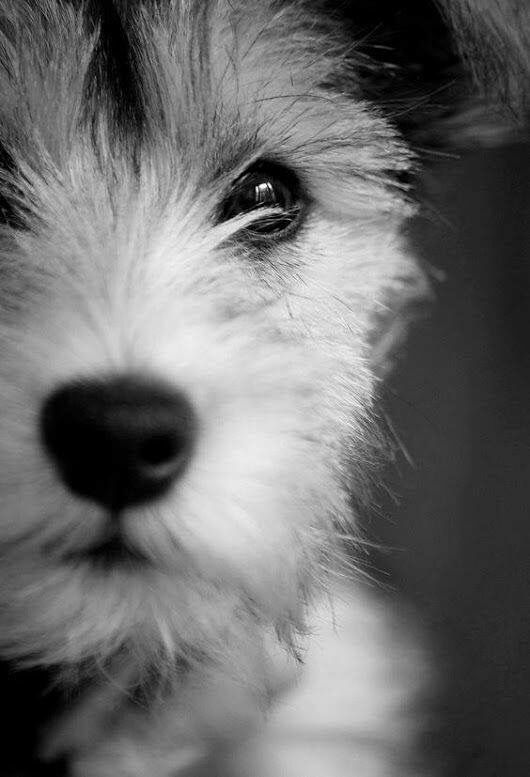 Lockige Hunderassen - Lockige Hunderassen