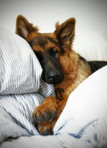 Lustige Bilder Hunde Für Facebook 218x300 - Lustige Bilder Hunde Für Facebook