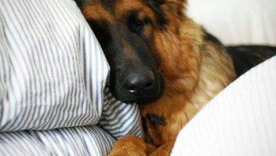 Lustige Bilder Hunde Für Facebook 390x220 - Lustige Bilder Hunde Für Facebook