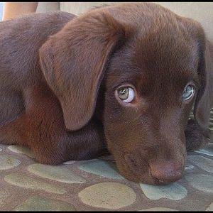 Lustige Bilder Hunde Kostenlos 300x300 - Lustige Bilder Hunde Kostenlos
