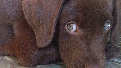 Lustige Bilder Hunde Kostenlos 390x220 - Lustige Bilder Hunde Kostenlos