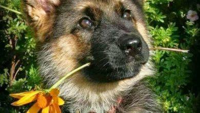 Lustige Bilder Hunde Kostenlos Herunterladen 390x220 - Lustige Bilder Hunde Kostenlos Herunterladen