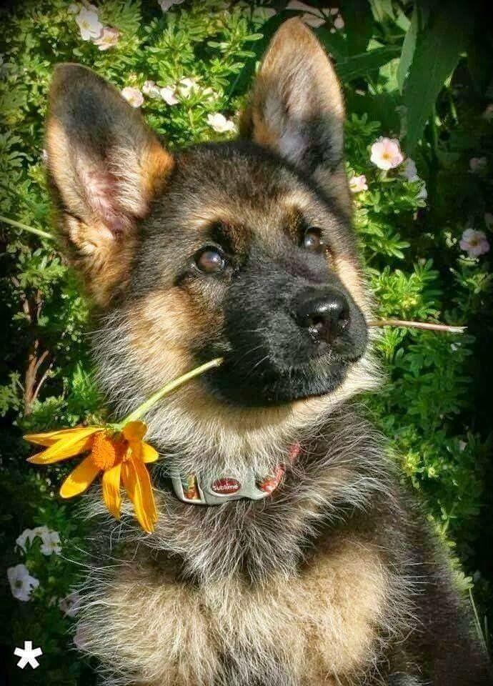 Lustige Bilder Hunde Kostenlos Herunterladen - Lustige Bilder Hunde Kostenlos Herunterladen