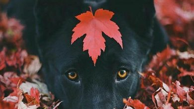 Lustige Bilder Hundebabys 390x220 - Lustige Bilder Hundebabys