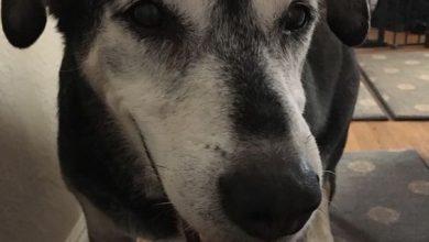 Lustige Bilder Hundebabys Für Facebook 390x220 - Lustige Bilder Hundebabys Für Facebook