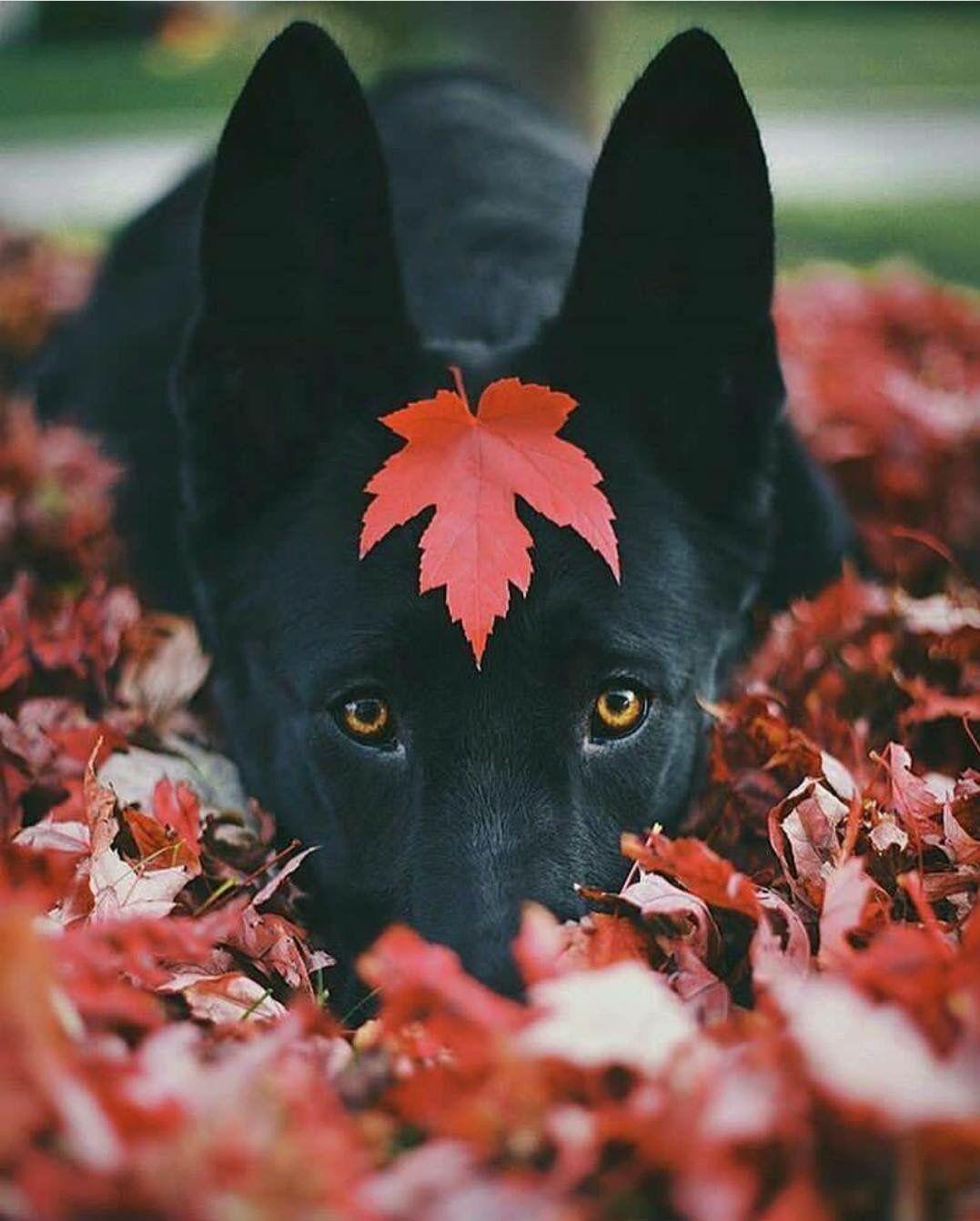 Lustige Bilder Hundebabys - Lustige Bilder Hundebabys