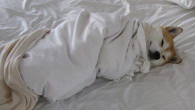 Lustige Bilder Mit Hunden Für Facebook 390x220 - Lustige Bilder Mit Hunden Für Facebook