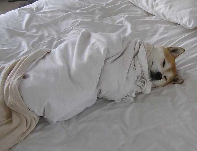 Lustige Bilder Mit Hunden Für Facebook - Lustige Bilder Mit Hunden Für Facebook