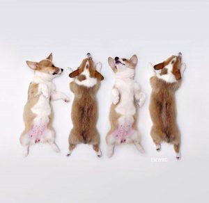 Lustige Bilder Mit Hunden Für Whatsapp 300x292 - Lustige Bilder Mit Hunden Für Whatsapp
