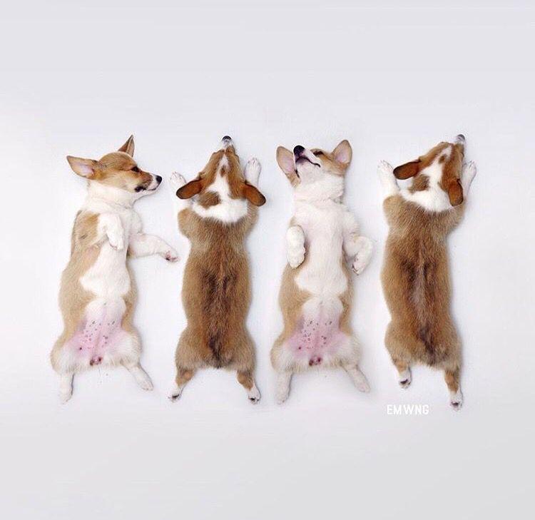 Lustige Bilder Mit Hunden Für Whatsapp - Lustige Bilder Mit Hunden Für Whatsapp