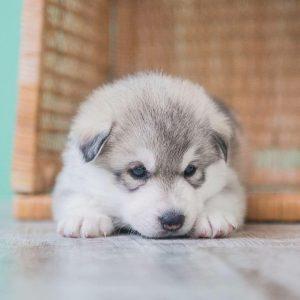 Lustige Bilder Von Hunden Für Facebook 300x300 - Lustige Bilder Von Hunden Für Facebook