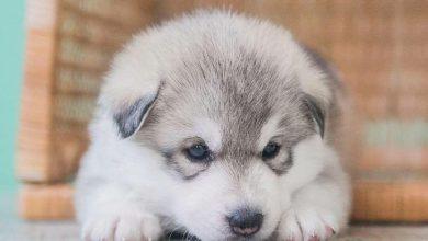 Lustige Bilder Von Hunden Für Facebook 390x220 - Lustige Bilder Von Hunden Für Facebook
