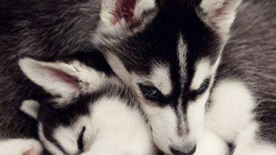 Lustige Bilder Von Hunden Kostenlos 390x220 - Lustige Bilder Von Hunden Kostenlos