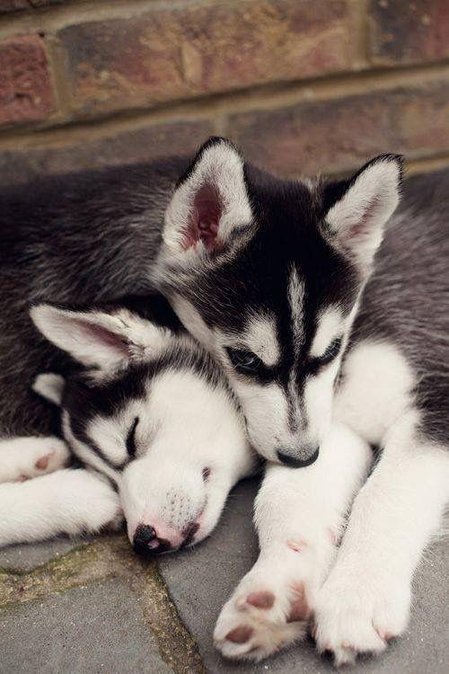Lustige Bilder Von Hunden Kostenlos - Lustige Bilder Von Hunden Kostenlos