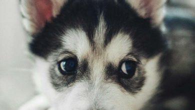 Lustige Geburtstagsbilder Hunden Für Facebook 390x220 - Lustige Geburtstagsbilder Hunden Für Facebook