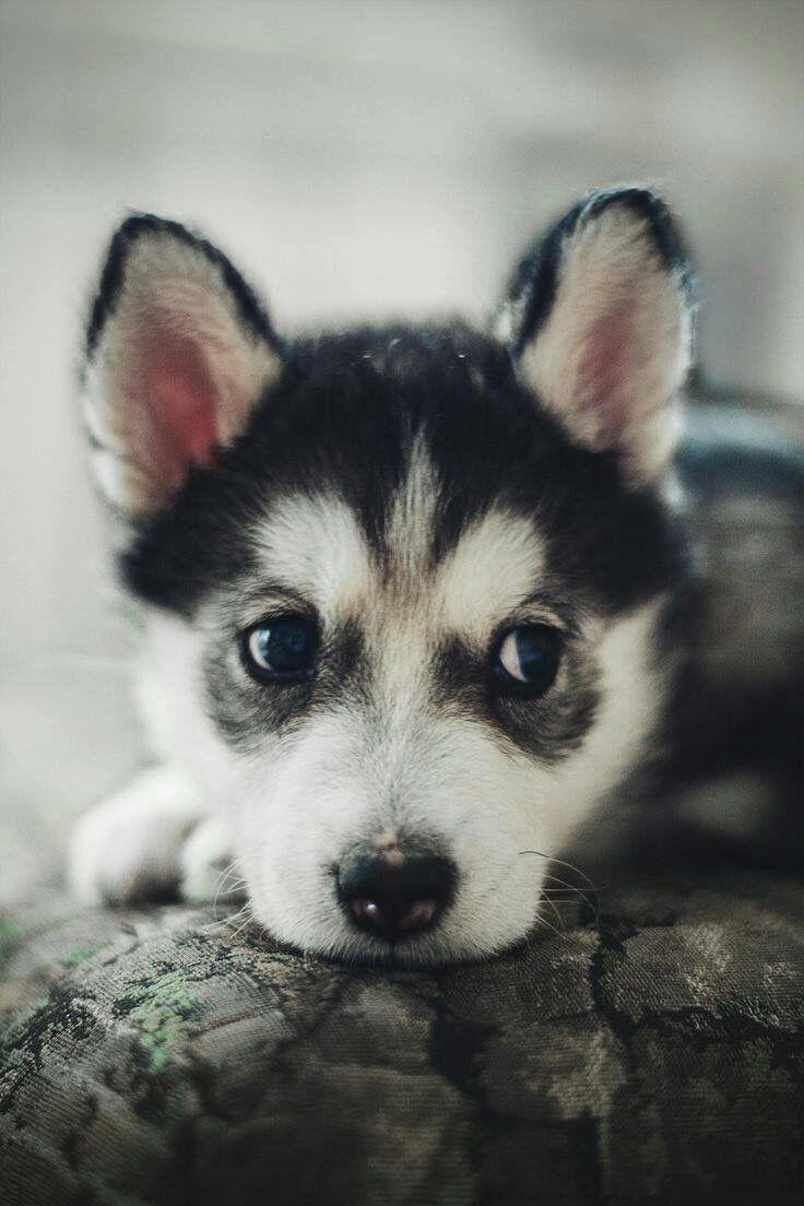 Lustige Geburtstagsbilder Hunden Für Facebook - Lustige Geburtstagsbilder Hunden Für Facebook