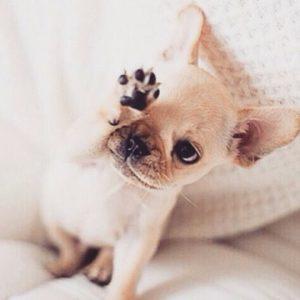 Lustige Geburtstagsbilder Mit Hunden Für Facebook 300x300 - Lustige Geburtstagsbilder Mit Hunden Für Facebook
