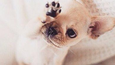 Lustige Geburtstagsbilder Mit Hunden Für Facebook 390x220 - Lustige Geburtstagsbilder Mit Hunden Für Facebook