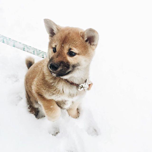 Lustige Hunde Bilder Für Facebook - Lustige Hunde Bilder Für Facebook