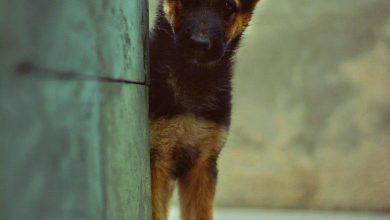 Lustige Hunde Bilder Kostenlos 390x220 - Lustige Hunde Bilder Kostenlos