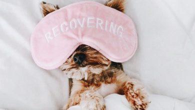Lustige Hunde Bilder Kostenlos Herunterladen 390x220 - Lustige Hunde Bilder Kostenlos Herunterladen
