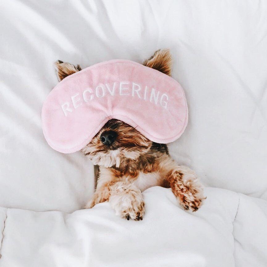 Lustige Hunde Bilder Kostenlos Herunterladen - Lustige Hunde Bilder Kostenlos Herunterladen