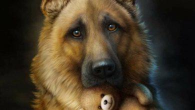 Lustige Hunde Bilder Kostenlos Kostenlos 390x220 - Lustige Hunde Bilder Kostenlos Kostenlos