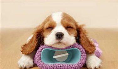 Lustige Hunde Bilder Kostenlos Kostenlos Herunterladen 376x220 - Lustige Hunde Bilder Kostenlos Kostenlos Herunterladen