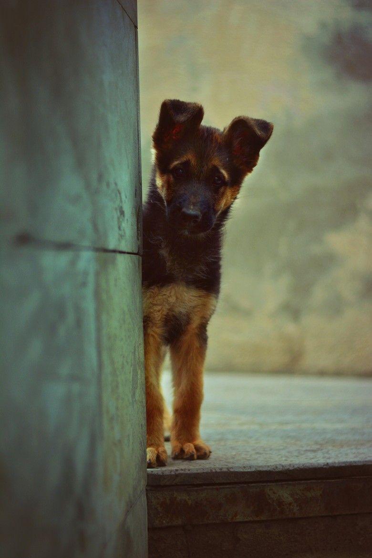 Lustige Hunde Bilder Kostenlos - Lustige Hunde Bilder Kostenlos