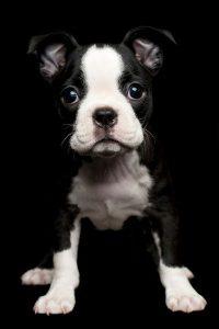 Lustige Hunde Bilder Mit Sprüchen 200x300 - Lustige Hunde Bilder Mit Sprüchen