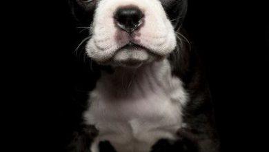 Lustige Hunde Bilder Mit Sprüchen 390x220 - Lustige Hunde Bilder Mit Sprüchen