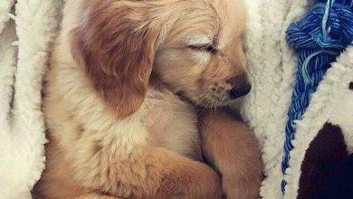 Lustige Hunde Bilder Mit Sprüchen Für Facebook 390x220 - Lustige Hunde Bilder Mit Sprüchen Für Facebook