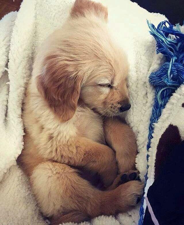 Lustige Hunde Bilder Mit Sprüchen Für Facebook - Lustige Hunde Bilder Mit Sprüchen Für Facebook