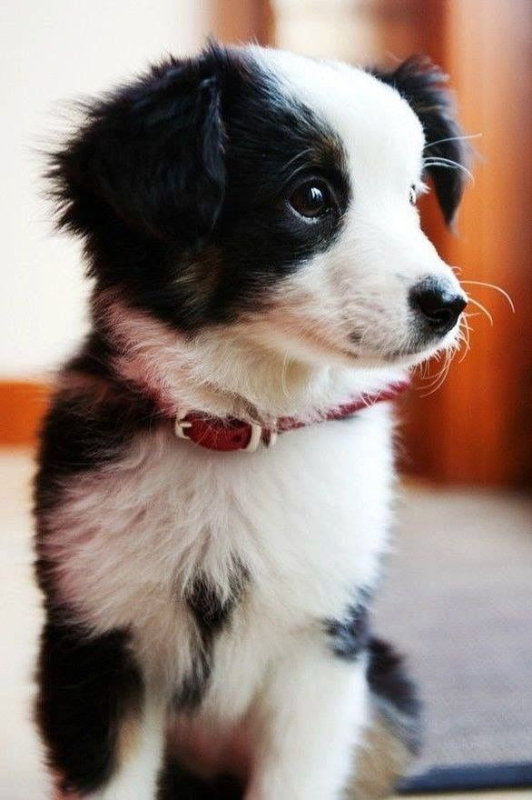 Lustige Hunde Bilder Mit Sprüchen Für Whatsapp - Lustige Hunde Bilder Mit Sprüchen Für Whatsapp