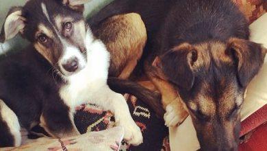 Lustige Hunde Bilder Mit Sprüchen Kostenlos 390x220 - Lustige Hunde Bilder Mit Sprüchen Kostenlos